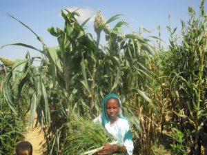 Il primo raccolto di Ilboutoul: un bel successo!